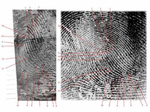 salvatore musio criminalistica-forense dattiloscopia 005