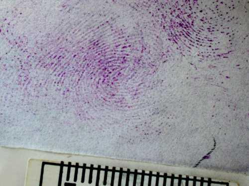 salvatore musio criminalistica-forense dattiloscopia 008